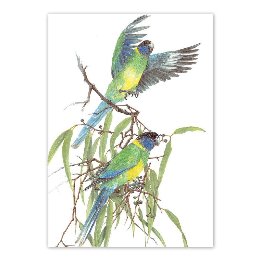 Barnardius zonarius, Port Lincoln Parrot  Art Card Art Card painted by Philippa Nikulinsky - studio Nikulinsky