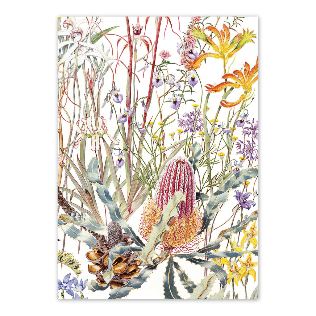 Wildflowers of the Swan Coastal Plain Art Card Art Card painted by Philippa Nikulinsky - studio Nikulinsky