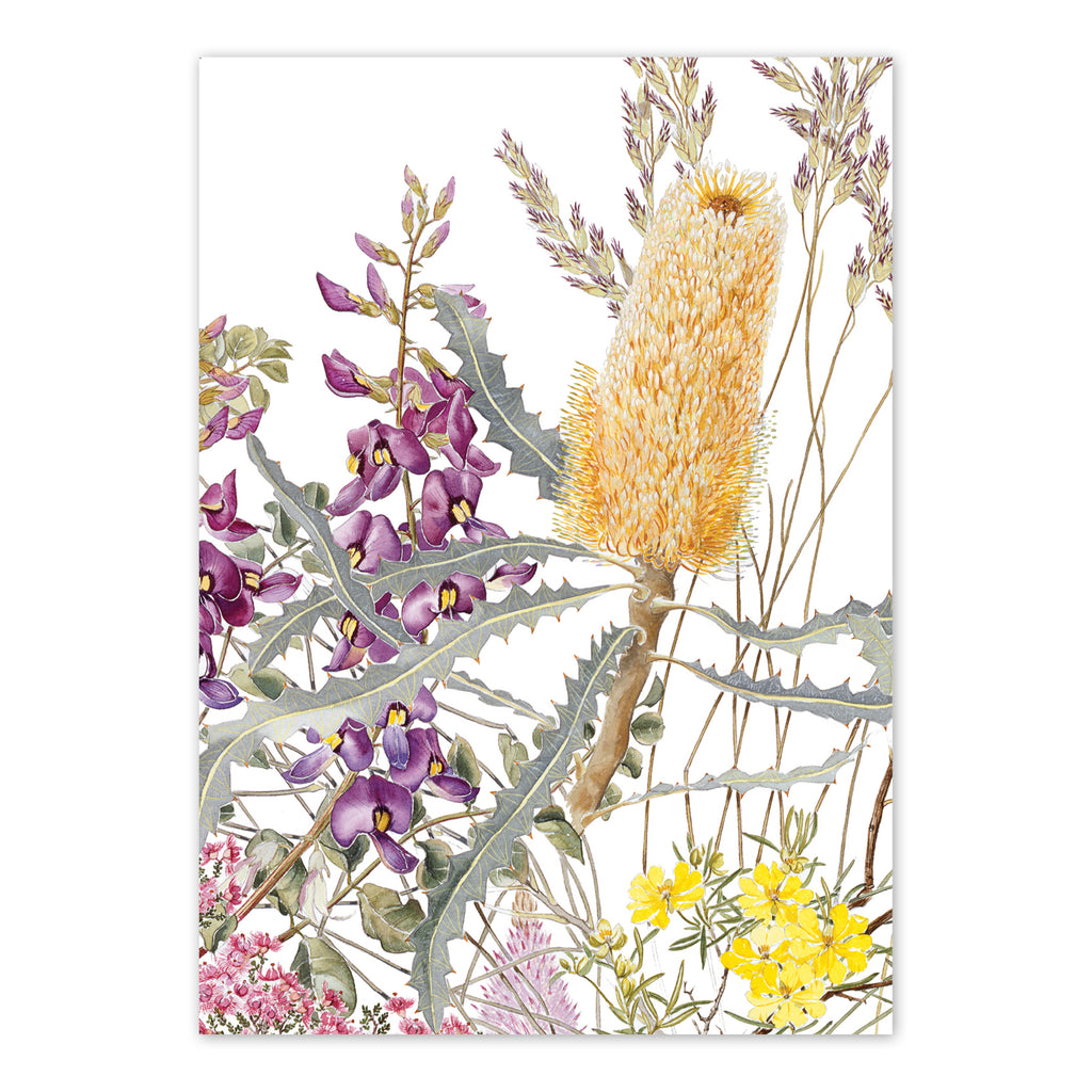 Wildflowers of the Murchison Ashburton Region 2 Art Card Art Card painted by Philippa Nikulinsky - studio Nikulinsky