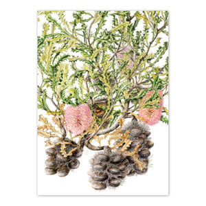 Open image in slideshow, studio-nikulinsky A6 Card: Caley's Banksia by Philippa Nikulinsky