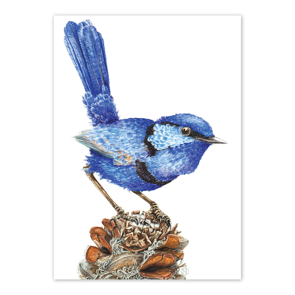 Splendid Fairy Wren Art Card Art Card painted by Philippa Nikulinsky - studio Nikulinsky