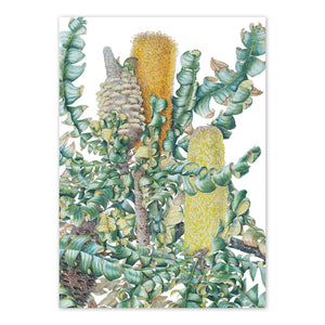 Open image in slideshow, studio-nikulinsky A6 Card: Bull Banksia by Philippa Nikulinsky