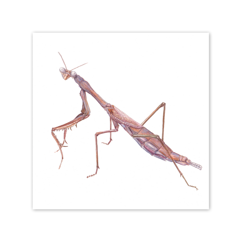 Praying Mantis Square Card Art Card painted by Philippa Nikulinsky - studio Nikulinsky