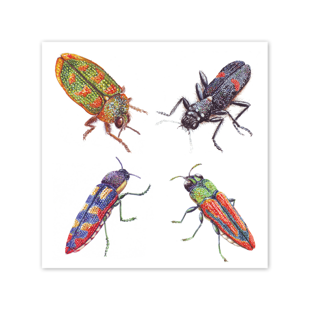 Jewel Beetles Square Card Art Card painted by Philippa Nikulinsky - studio Nikulinsky