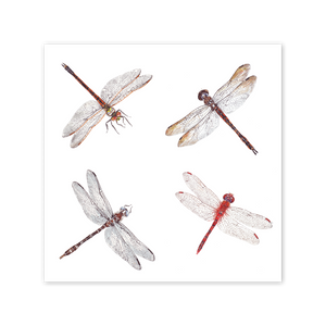 Dragonflies Square Card Art Card painted by Philippa Nikulinsky - studio Nikulinsky
