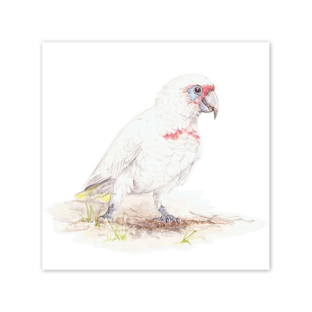 Western Long-Billed Corella Square Card Art Card painted by Philippa Nikulinsky - studio Nikulinsky