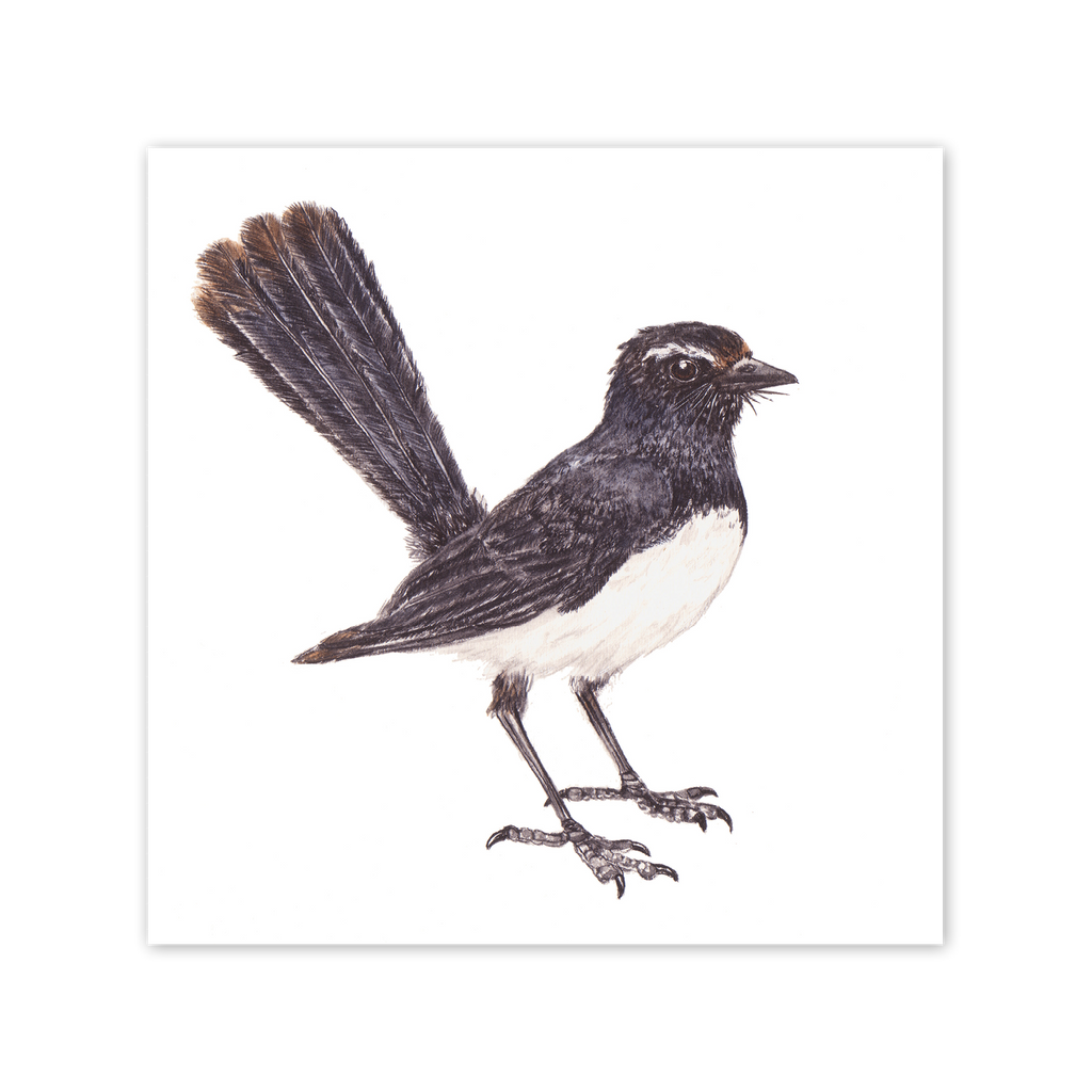Willie Wagtail Square Card Art Card painted by Philippa Nikulinsky - studio Nikulinsky