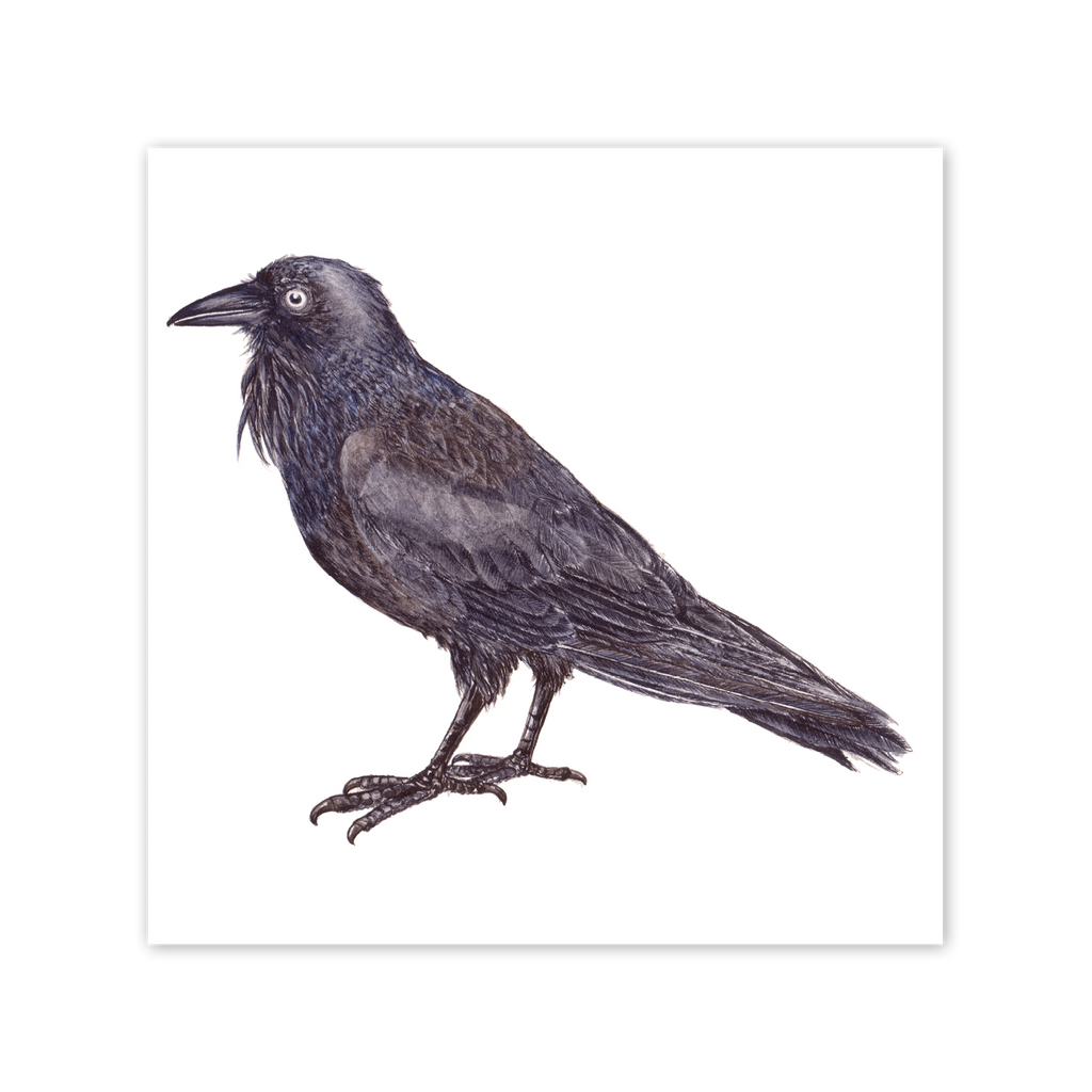 Australian Raven Square Card Art Card painted by Philippa Nikulinsky - studio Nikulinsky