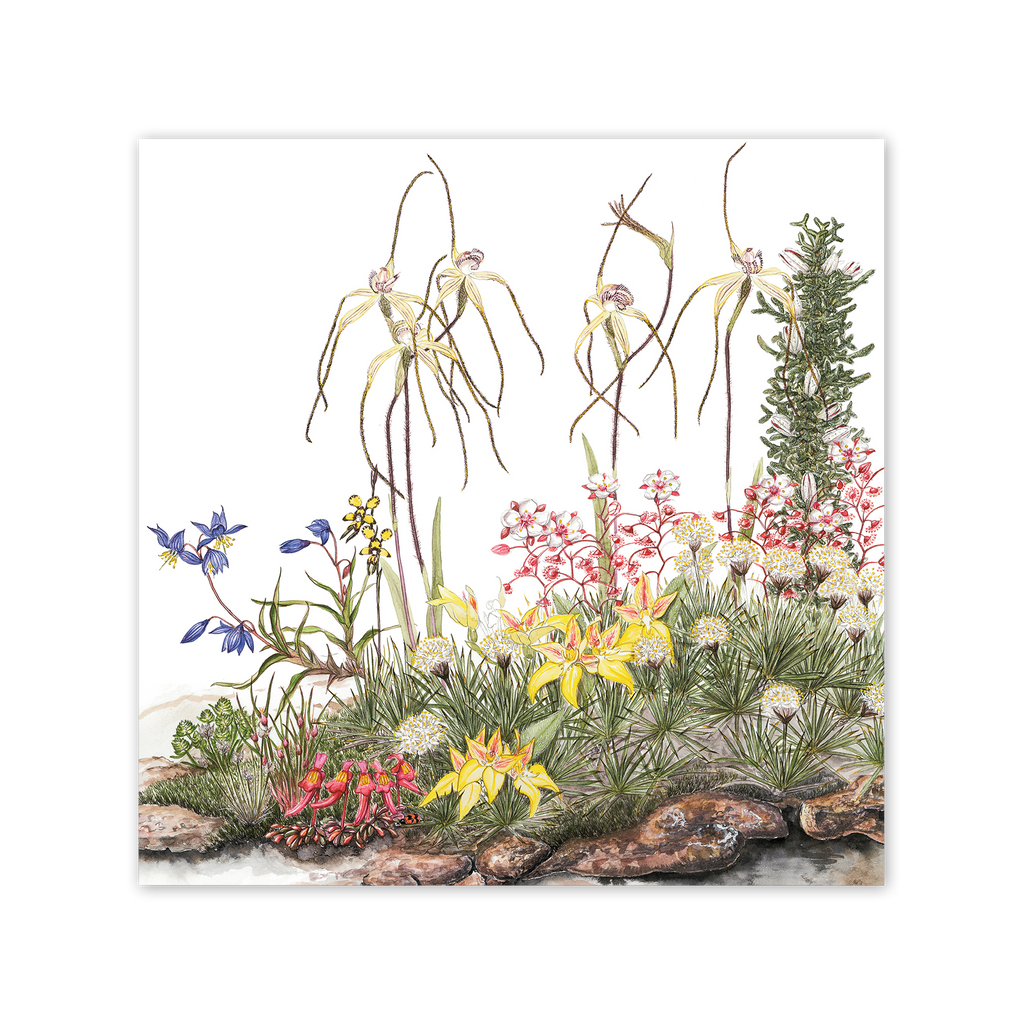 Island Spider Orchid Square Card Art Card painted by Philippa Nikulinsky - studio Nikulinsky