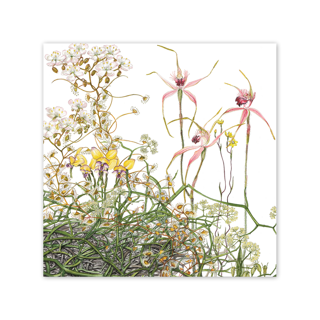 Heberle's Spider Orchid Square Card Art Card painted by Philippa Nikulinsky - studio Nikulinsky