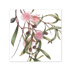 Open image in slideshow, Pincushion Hakea Square Card Art Card painted by Philippa Nikulinsky - studio Nikulinsky