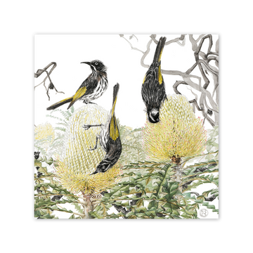 New Holland Honeyeater on Showy Banksia Square Card Art Card painted by Philippa Nikulinsky - studio Nikulinsky