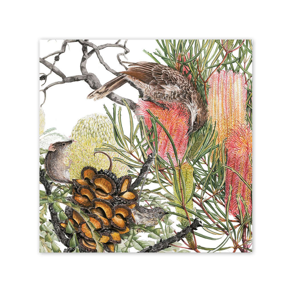 Banksia & Pollinators Square Card Art Card painted by Philippa Nikulinsky - studio Nikulinsky