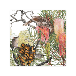 Open image in slideshow, Banksia & Pollinators Square Card Art Card painted by Philippa Nikulinsky - studio Nikulinsky
