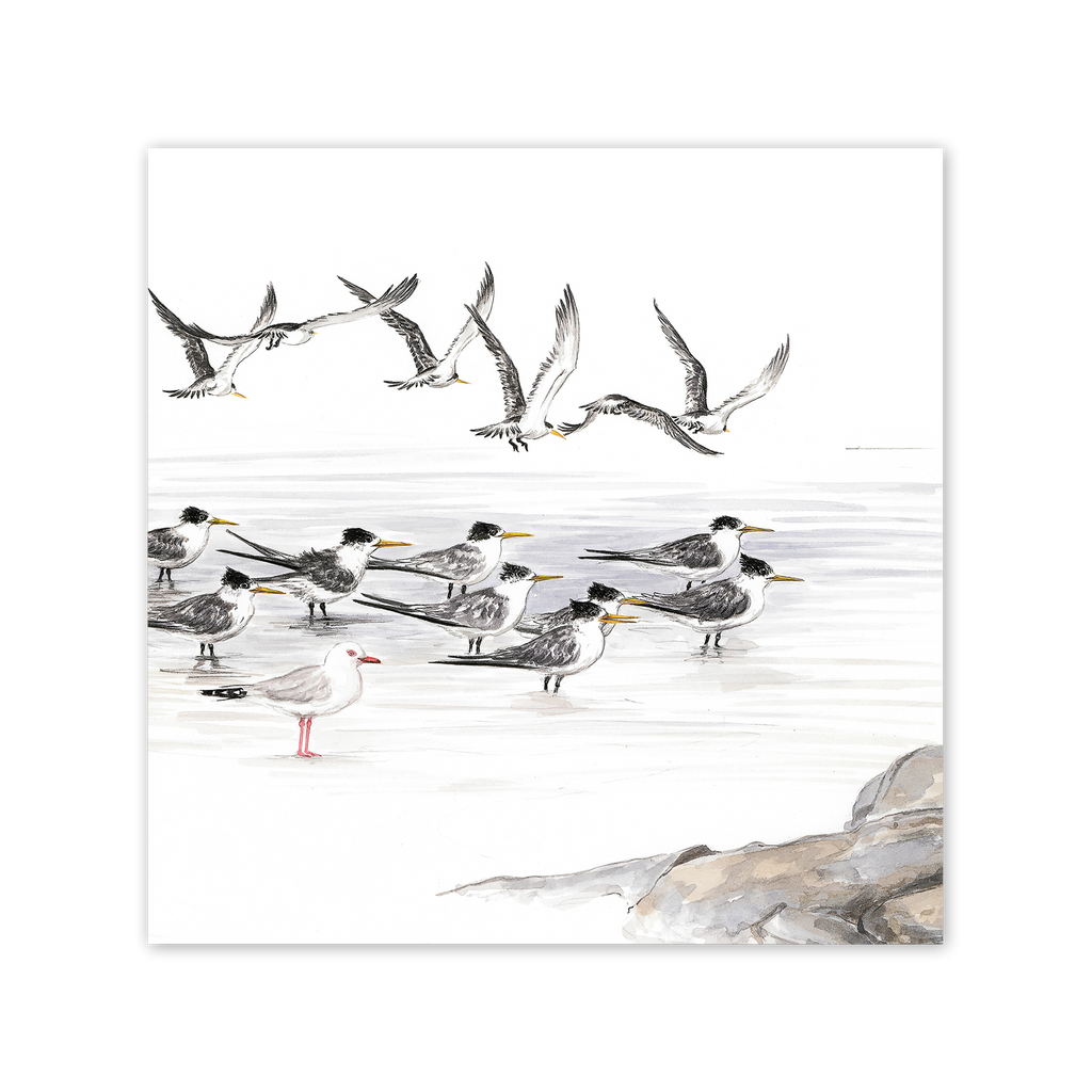 Seabirds Square Card Art Card painted by Philippa Nikulinsky - studio Nikulinsky