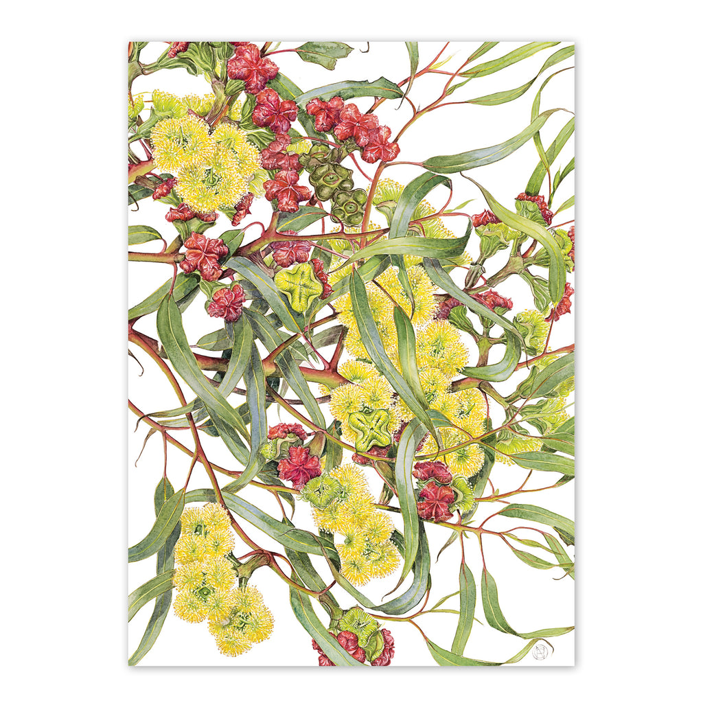 Boxed Greeting Cards: EUCALYPTUS