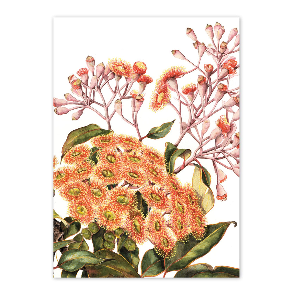 Corymbia Ficifolia, Red Flowering Gum Art Card Art Card painted by Philippa Nikulinsky - studio Nikulinsky