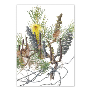 Open image in slideshow, studio-nikulinsky A6 Card: Pine Banksia by Philippa Nikulinsky