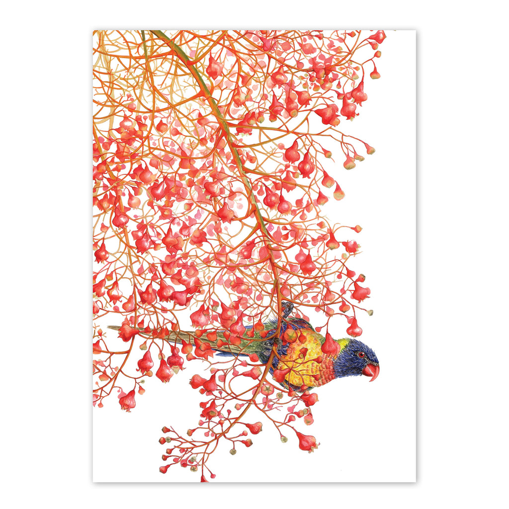 Rainbow lorikeets on Illawarra flame tree Art Card Art Card painted by Philippa Nikulinsky - studio Nikulinsky