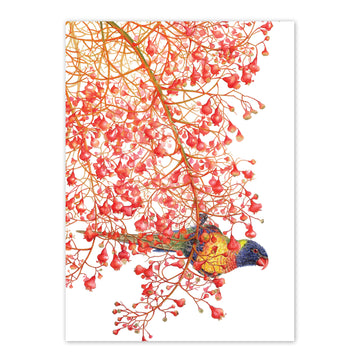 studio-nikulinsky A6 Card: Rainbow lorikeets by Philippa Nikulinsky
