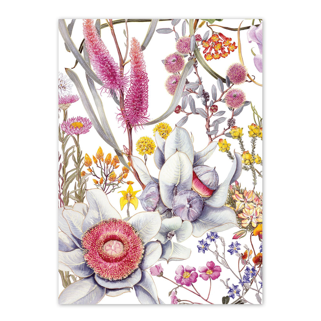 studio-nikulinsky A6 Card: Wildflowers of the Northern Wheatbelt by Philippa Nikulinsky