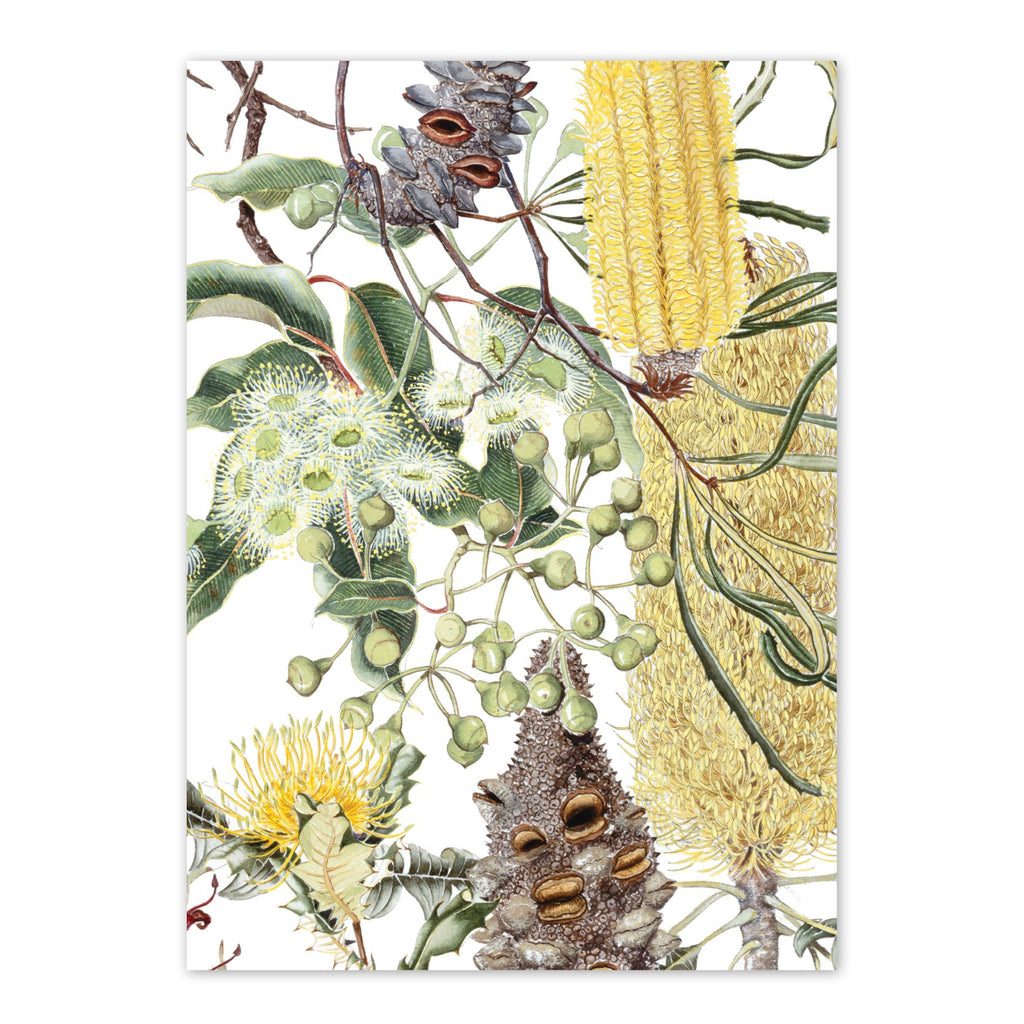 Wildflowers of the Jarrah Forest 1 Art Card Art Card painted by Philippa Nikulinsky - studio Nikulinsky
