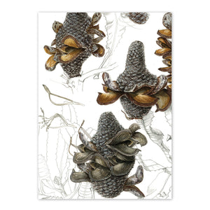 Open image in slideshow, studio-nikulinsky A6 Card: Firewood Banksia by Philippa Nikulinsky