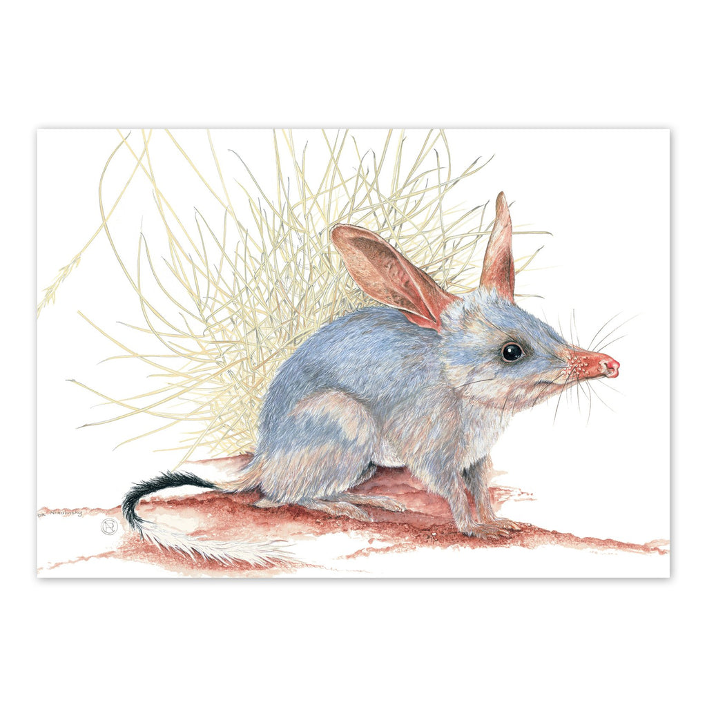 Bilby Art Card Art Card painted by Philippa Nikulinsky - studio Nikulinsky