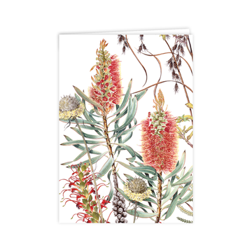 A6 Card: Wildflowers of the Albany Region 1