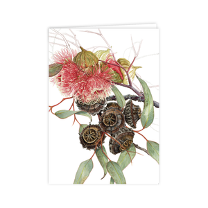 Open image in slideshow, A6 Card: Eucalyptus Large-fruited Mallee