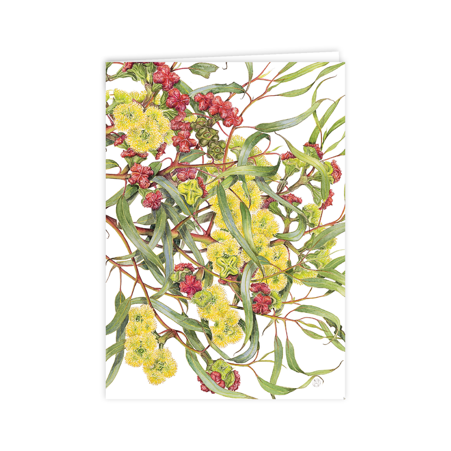 A6 Card: Eucalyptus Red-capped Gum