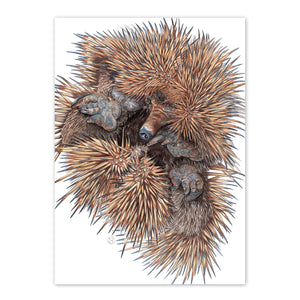 Open image in slideshow, studio-nikulinsky A6 Card: Echidna by Philippa Nikulinsky