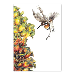 studio-nikulinsky A6 Card: Royal Hakea & Western spinebill by Philippa Nikulinsky