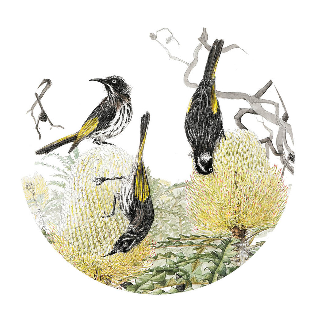 Pocket Mirror: Birds & Banksias