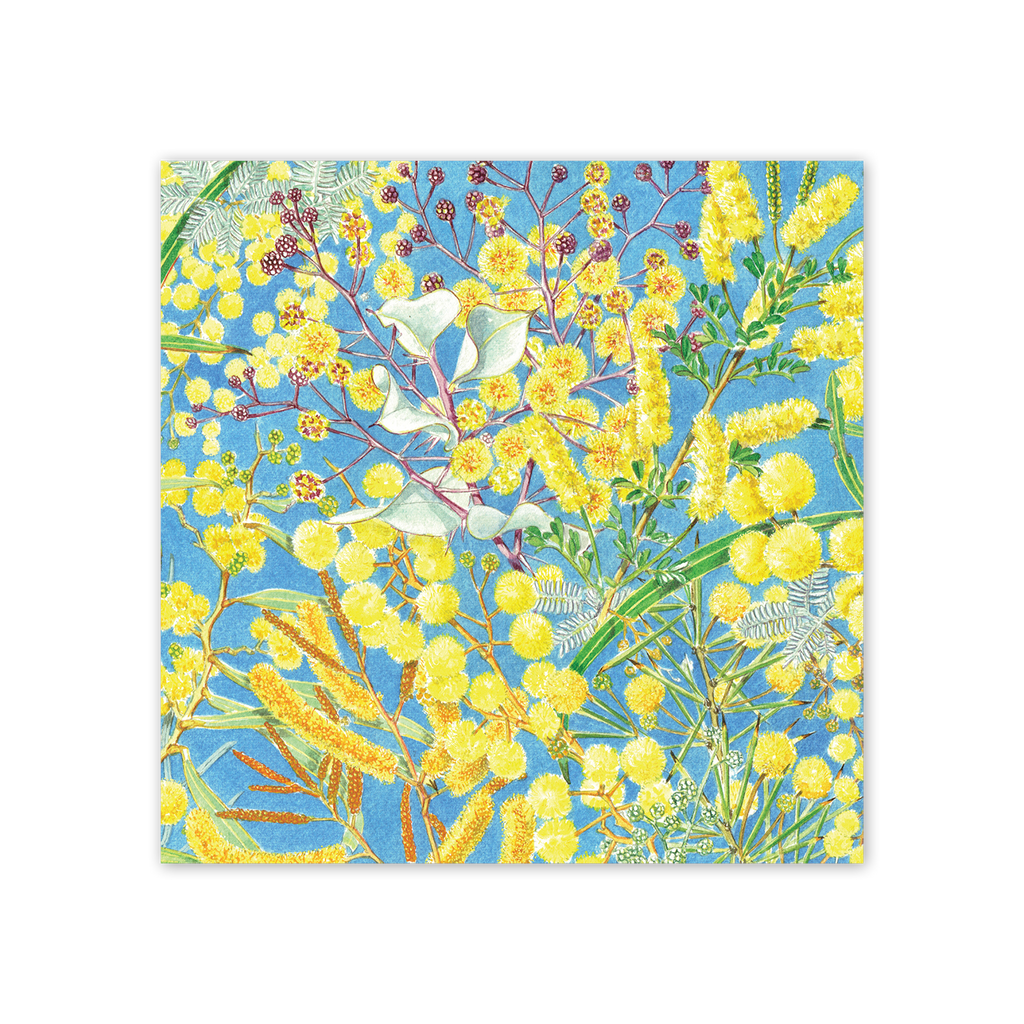 studio-nikulinsky Square Card: Wattle by Philippa Nikulinsky