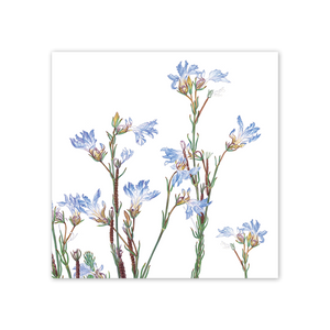 Open image in slideshow, studio-nikulinsky Square Card: Lechenaultia striata by Philippa Nikulinsky