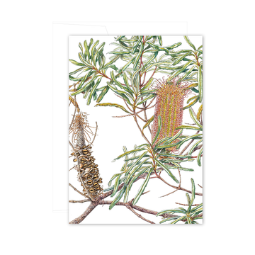 A6 Card: River Banksia