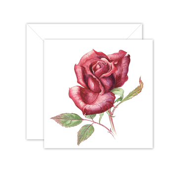 Square Card: Maria's Garden - Red Rose