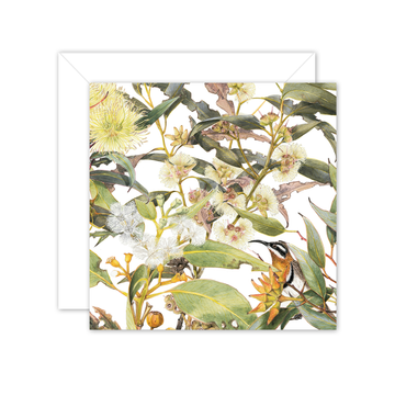 Square Card: Eucalyptus & Spinebill