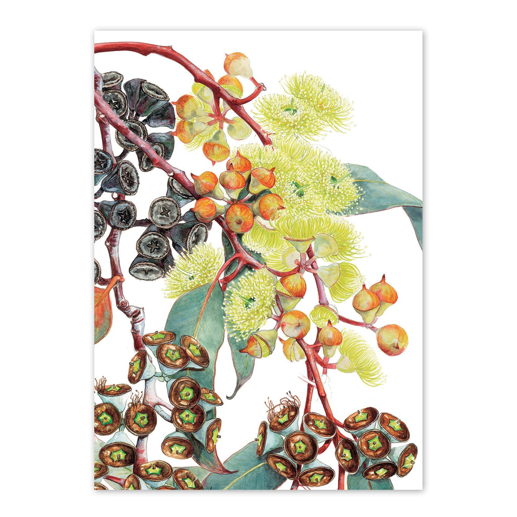 Eucalyptus woodwardii, Lemon-flowered mallee Art Card Art Card painted by Philippa Nikulinsky - studio Nikulinsky