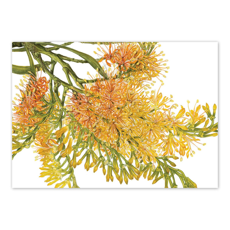 Nuytsia floribunda, Christmas Tree Art Card Art Card painted by Philippa Nikulinsky - studio Nikulinsky