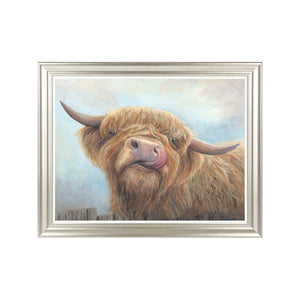 Cheeky Highland Cow