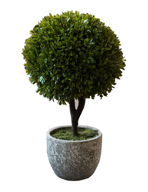 Mini Boxwood Ball In Pot Plant