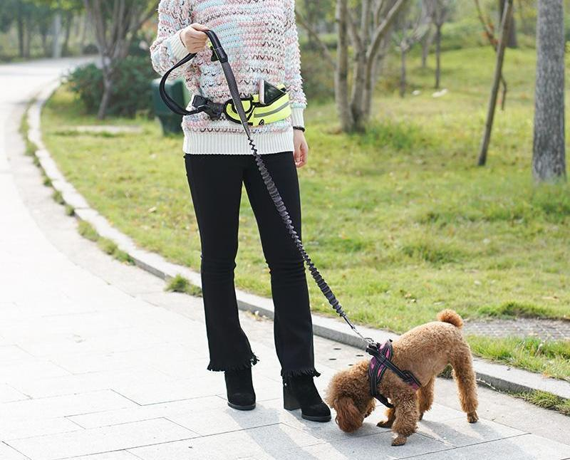 Dog Hands-Free Adjustable Elastic Leash