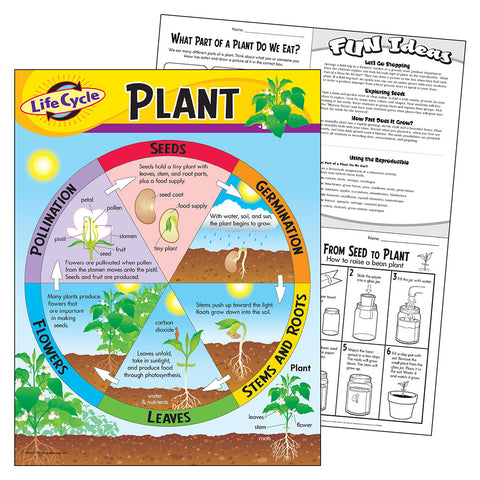 Life Cycle Of A Plant Chart