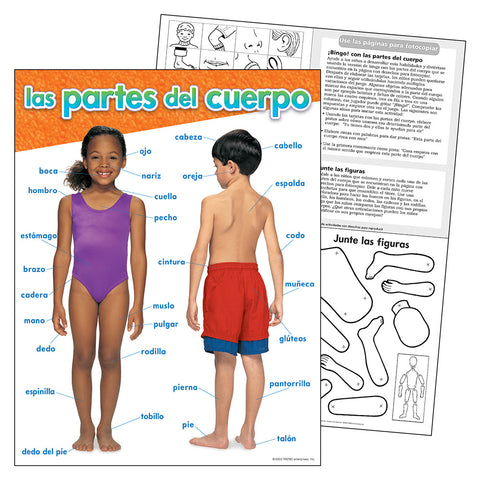 Spanish Parts Of The Body Chart