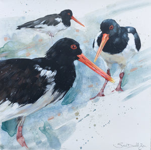 Three Oyster Catchers