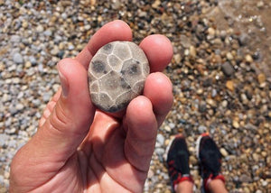 Where Can You Buy Petoskey Stones?