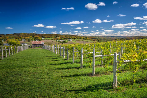 petoskey farms vineyard and winery