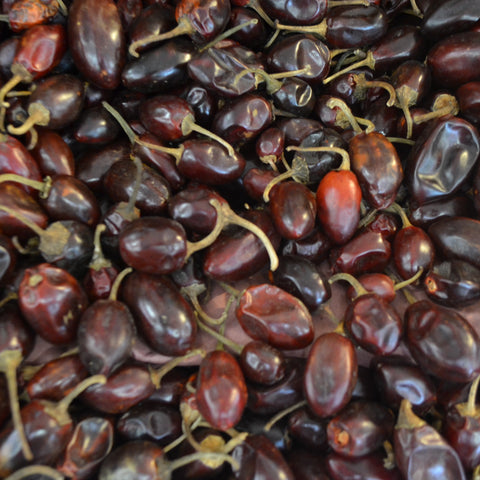 Chile Cascabel